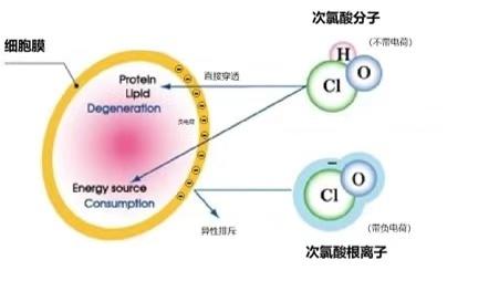 微酸性电解水次氯酸与84消毒液有什么不同,家用消毒效果对比如何?